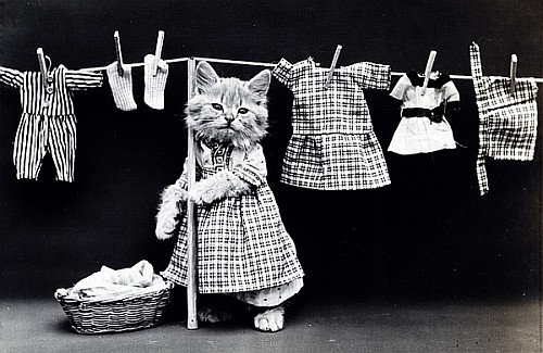 Recycle Everything Cats Clothing