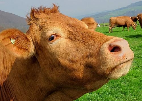 Benefits Of Organic Farming