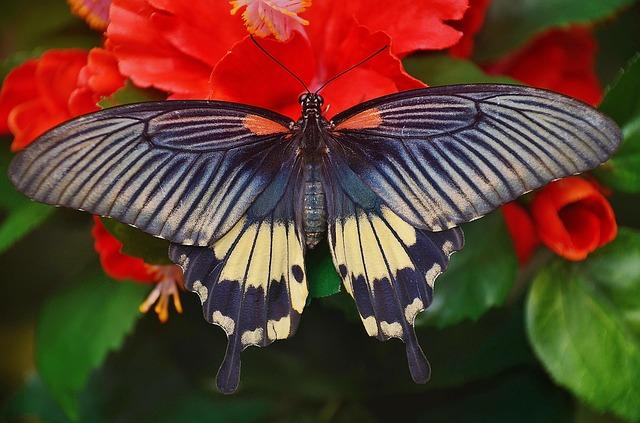 Flowers that Attract Butterflies - Swallowtail