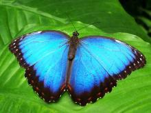 Flowers that Attract Butterflies x