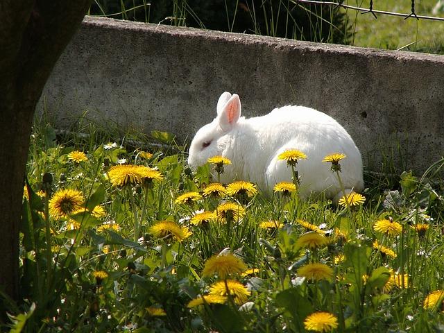 organic spring gardening tips - rabbit