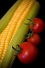 Aquaponic gardening as a business sweet corn and tomatoes image
