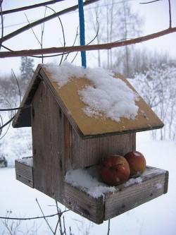 Attract Winter Wildlife to Your Garden - Bird Table
