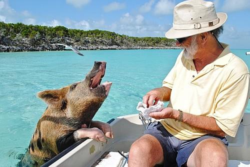 Bahama Vacations
