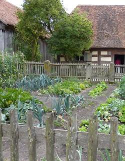 Benefits of organic food - vegetable garden