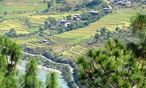 Bhutan Tourism - Bhutan Field