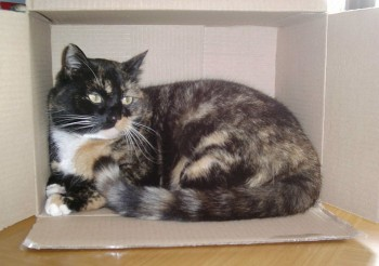 Eco House - Tortoiseshell cat in a box