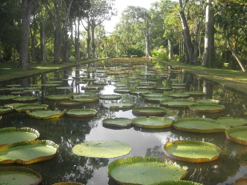 Eco-Holiday Giant Water Lilies Mauritius