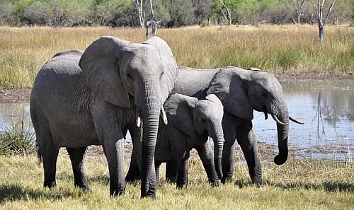 - Ivory Trade 2013 -