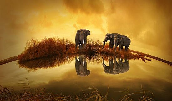 Ivory Trade 2013