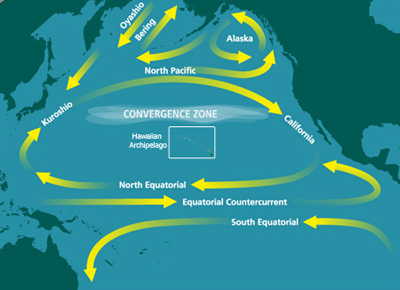 North Pacific Subtropical Convergence Zone