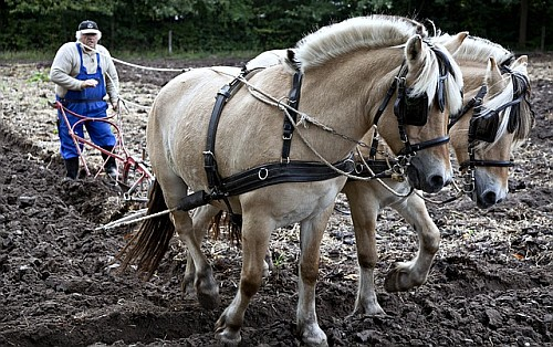 Organic Food Benefits - Horse drawn plough