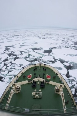 Polar bears habitat - Arctic Ice breaker