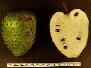 Soursop cancer research image