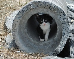 pictures of cats - Cat in a tube