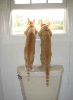 pictures of cats - Loo with a view