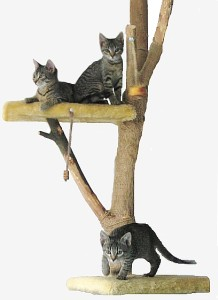 pictures of cats - tree house