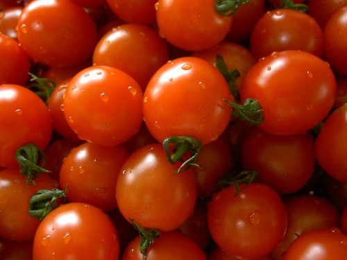 organic fertilizer - Small tomatos