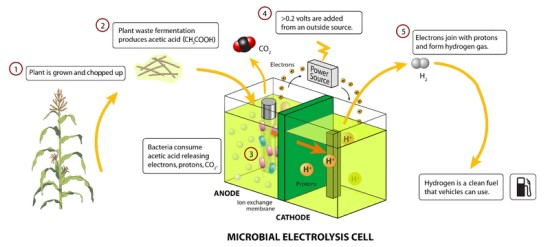 renewable energy sources - Microbial electrolysis cell
