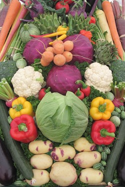 organic fertilizer - vegetables